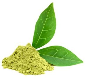 Matcha Leaf - Matcha Green Tea